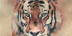 Conor McGregor tigre